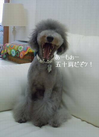 DSCN3097_20110609134509.jpg
