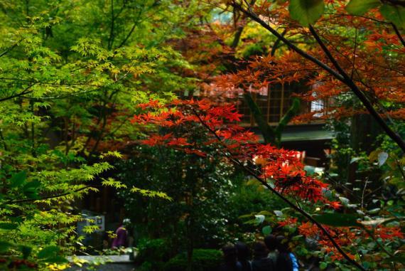 2011年11月23日大興善寺 (107)