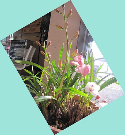 ゲレンデの花
