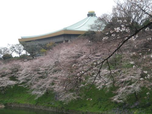 桜と武道館100331