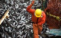 fp_potp_pollockfishing608.jpg