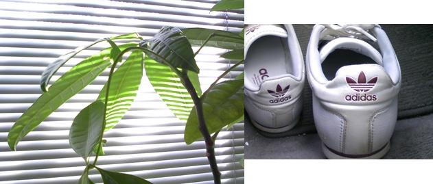 adidas-horz.jpg
