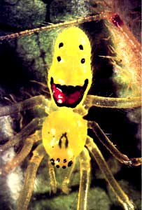 happyface_spider.jpg