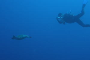 ダイビング カメ