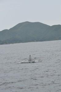 クジラ登場