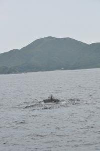 クジラ潜水前