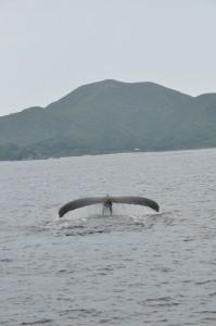 クジラ潜水開始