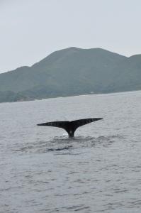 クジラ潜水