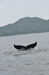 クジラ消えそう