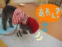 こま 帽子2