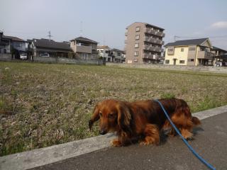 お散歩にて♪