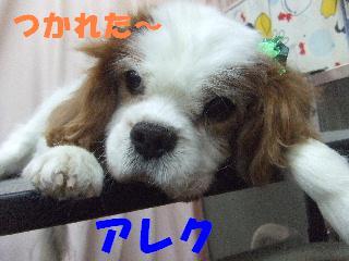 2008_11210059.jpg