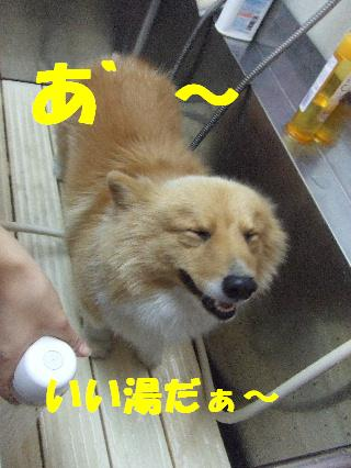 2008_120100048.jpg