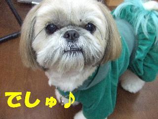 2008_12010047.jpg