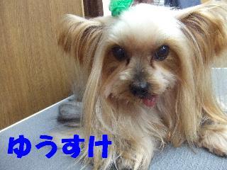 2008_12010061.jpg
