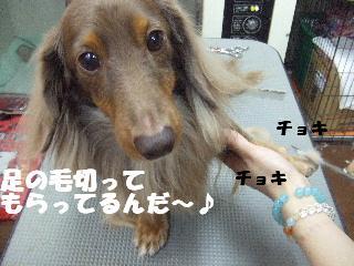 2008_12010087.jpg