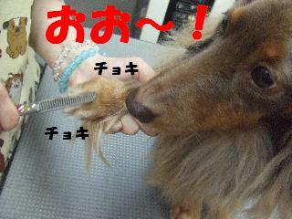 2008_12010089.jpg