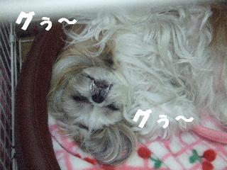 2008_12050025.jpg