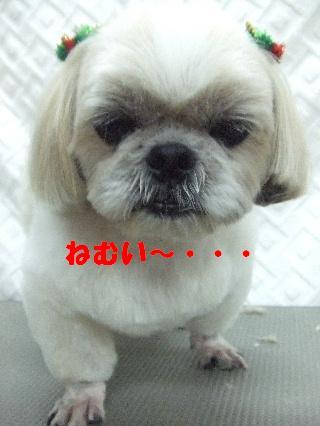 2008_12080067.jpg