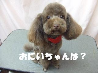 2008_12080072.jpg