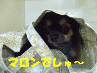 2009_01090057.jpg