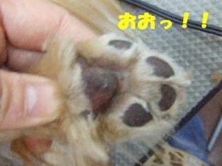 2009_01110041.jpg