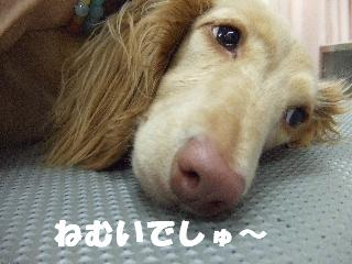 2009_01110045.jpg