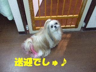 2009_01140007.jpg