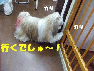 2009_01140008.jpg