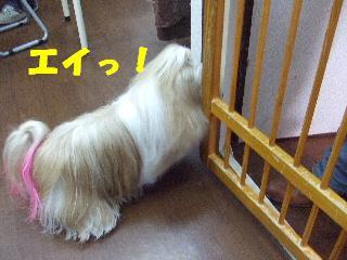 2009_01140009.jpg