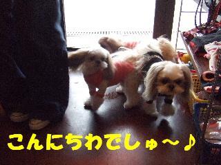 2009_01180078.jpg