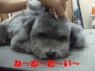 2009_01180109.jpg