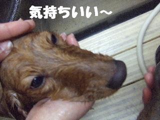 2009_01250011.jpg