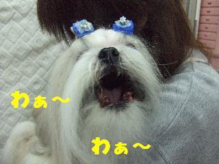 2009_01250026.jpg