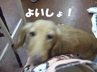 2009_01280009.jpg