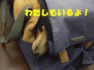 2009_02010008.jpg