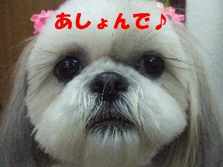 2009_02010031.jpg