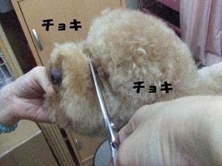 2009_02060074.jpg