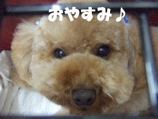 2009_02060090.jpg