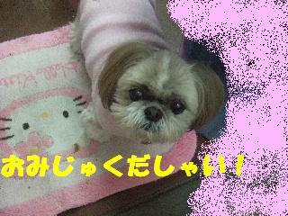 2009_02060105.jpg