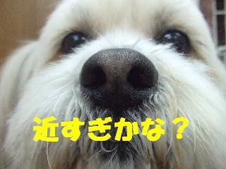 2009_02160024.jpg