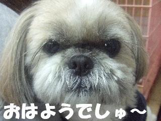 2009_02230279.jpg