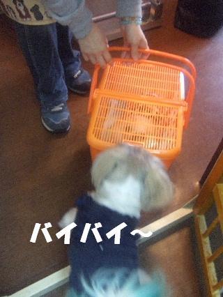 2009_02230283.jpg