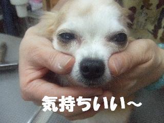 2009_02230293.jpg