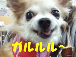 2009_02230298.jpg
