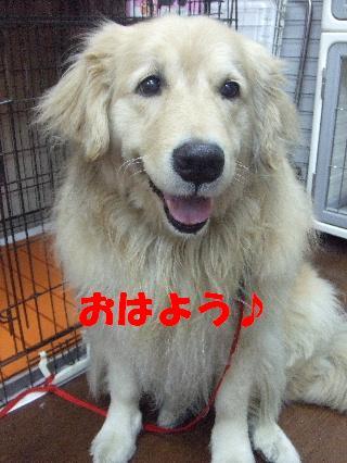 2009_02270007.jpg