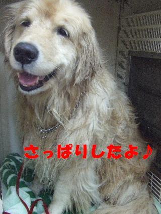 2009_02270010.jpg