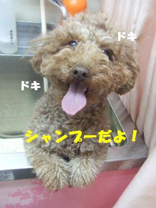 2009_02270019.jpg