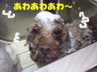 2009_02270020.jpg
