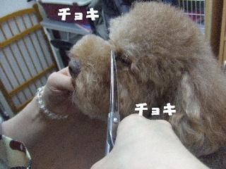 2009_02270027.jpg